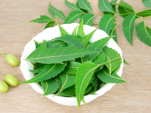 Hasil gambar untuk daun neem