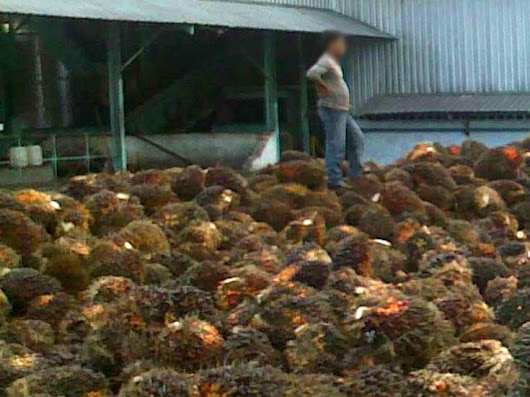 Indonesia's Crude Palm Oil Output Seen Higher