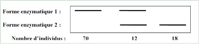 Structures alléliques génotypiques et panmixie