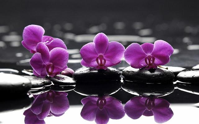 Mooie achtergrond met roze of paarse bloemen bij het water