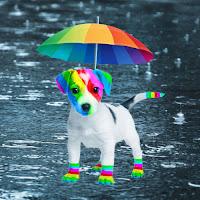 El perro arcoíris sonríe en Cice bajo la lluvía