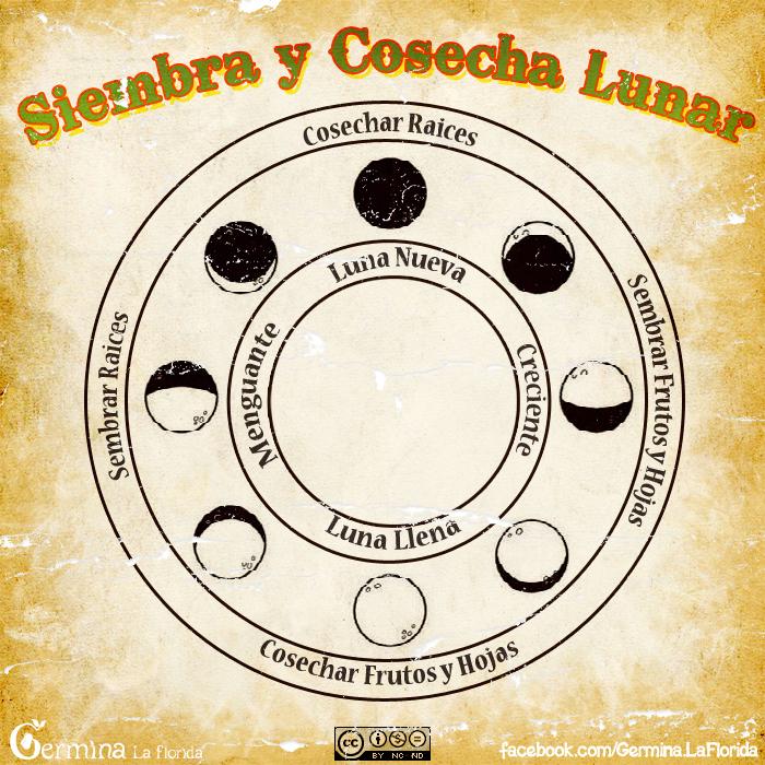 Calendario Lunar De Siembra.Que Sembrar En Agosto Mate Club De Conversacion