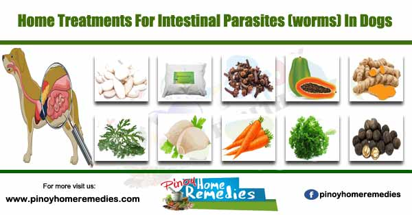 Home Treatments For Intestinal Parasites (worms) In Dogs