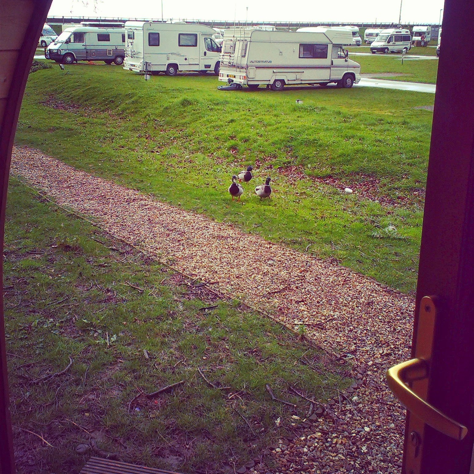 Ducks at the holiday chalet