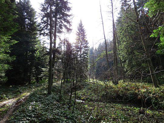 Leśna dolina.