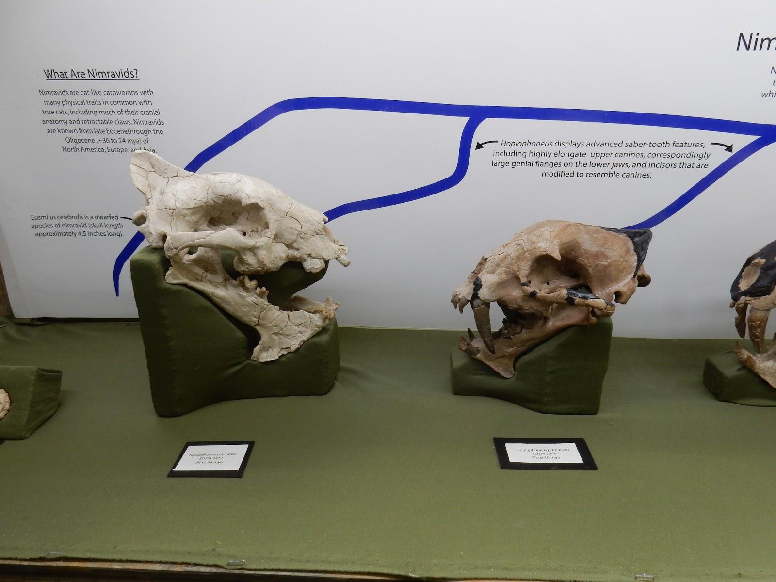 raptormaniacs south dakota of mines museum of geology