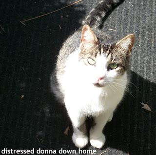 Miss Peepers, beloved cat
