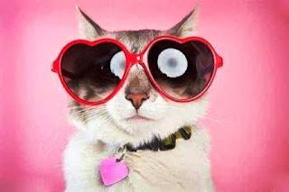 Gambar Kucing Lucu Pakai Kacamata Love Pink