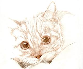 cat portrait_ susan perez