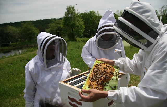 Ξεκίνησαν οι επιδοτήσεις για τις κυψέλες και τις μετακινήσεις των μελισσοκόμων: Αιτήσεις μέχρι 28 Απριλίου