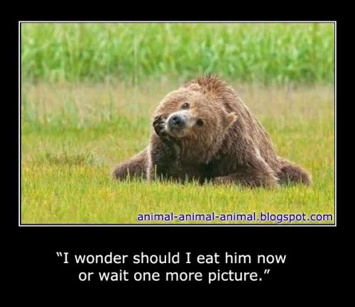 WILD MEMES image memes at relatably.com |Wild Memes