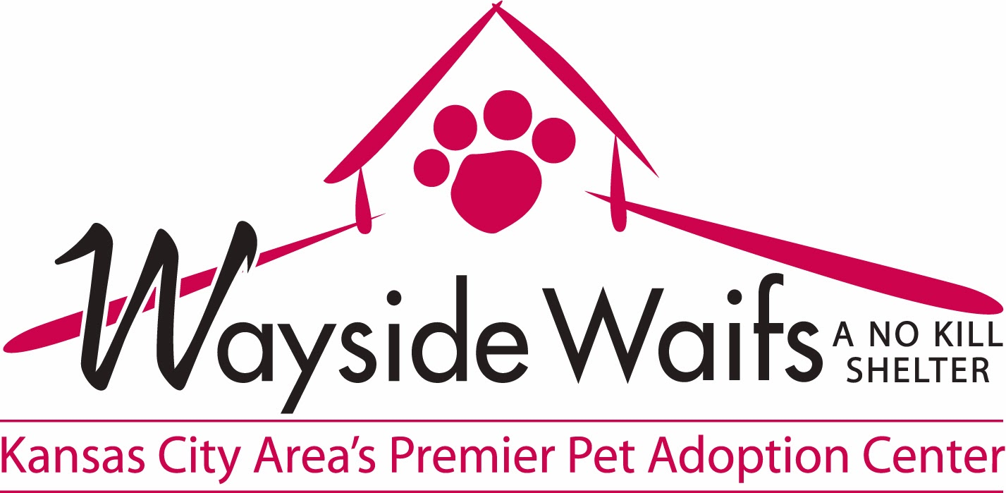 http://www.waysidewaifs.org/site/PageServer?pagename=Available_cats_new