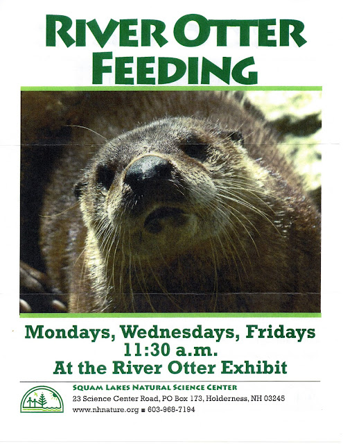 Join the River Otter Feeding | posted 5-9-17