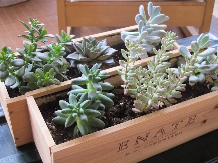 Reciclar cajas de vino y transformarlas en una jardinera para plantas