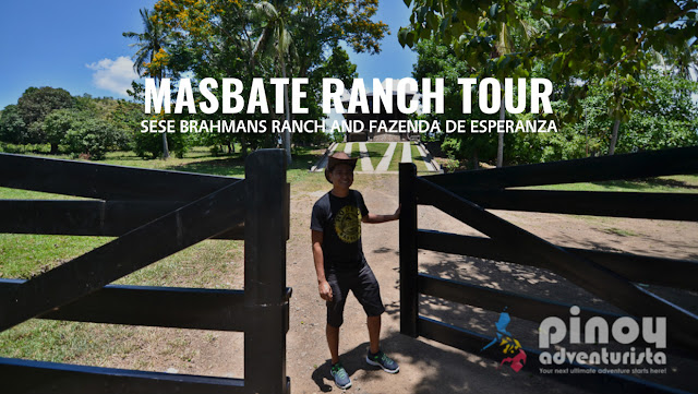 MASBATE: Ranch Tour at Sese Brahmans Ranch and Fazenda de Esperanza