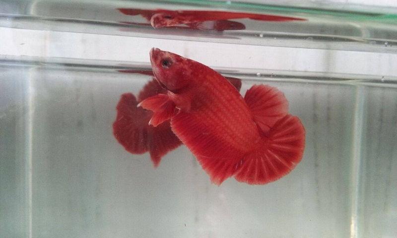 Betta Fish Food Amount Photo