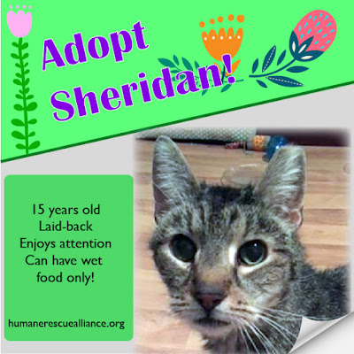 Adopt Sheridan--Humane Rescue Alliance