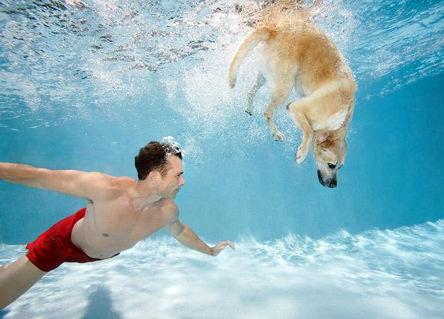 revolusiilmiah.com - Anjing dilatih untuk berenang guna penyelamatan