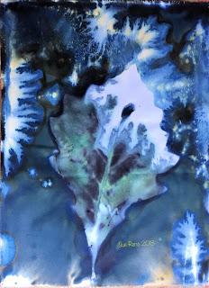 Wet cyanotype_Sue Reno_Image 455