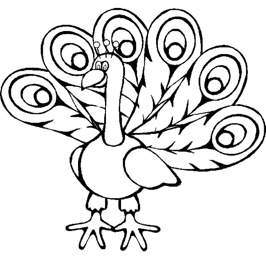 Mewarnai Gambar Burung Merak Anak 3