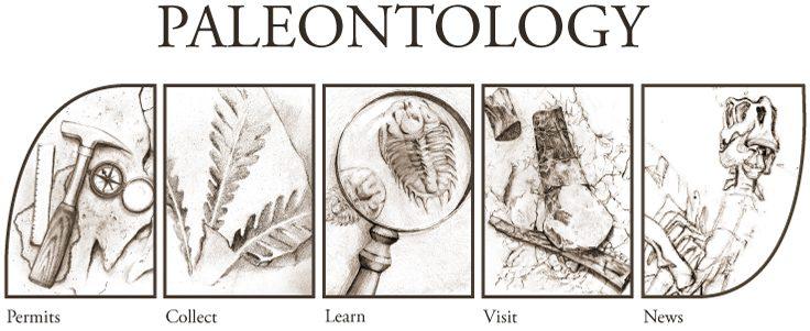 Paleontologist Tools Clipart 49992 | NEWSMOV
