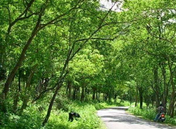 News, Kerala, Top-Headlines, Forest, Idukki,Elephant wall will be constructed in Marayoor