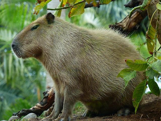 टॉप १० - इंसान के सबसे दोस्ताना जानवर