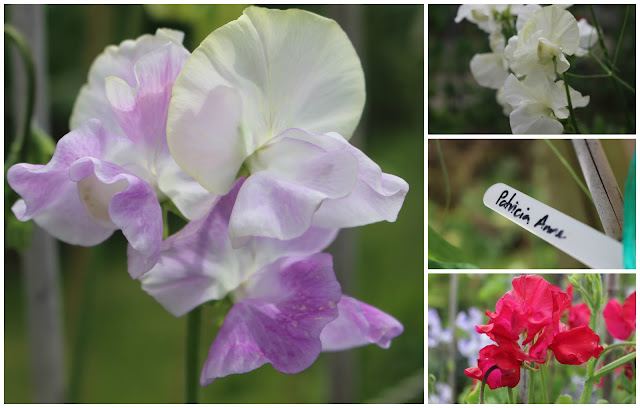 Some of the sweet peas which caught my eye