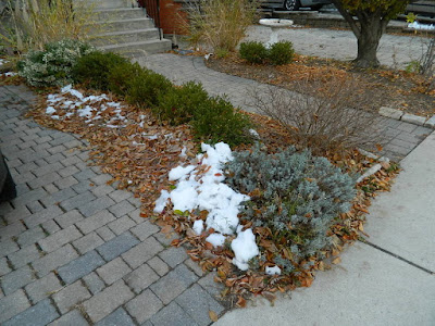 St. Clair West Village Toronto Front Yard Fall Cleanup Before by Paul Jung Gardening Services--a Toronto Gardening Services Company