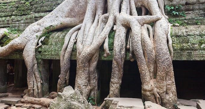 Programmes conseillés pour le site d'Angkor et alentours de Siem Reap