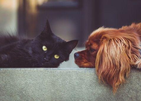 Francia otorga derechos a perros y gatos como seres vivos
