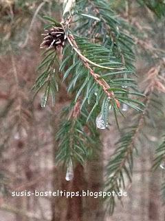 Eistropfen in einem Nadelbaum, Foto von Unabhängiger Stampin' Up! Demonstratorin Susanne McDonald