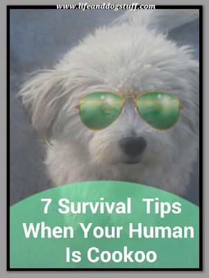 7 Survival Tips When Your Human Is Cookoo