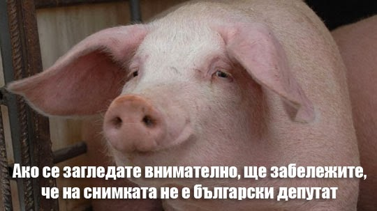 Ако се загледате внимателно, ще забележите, че на снимката не е български депутат!