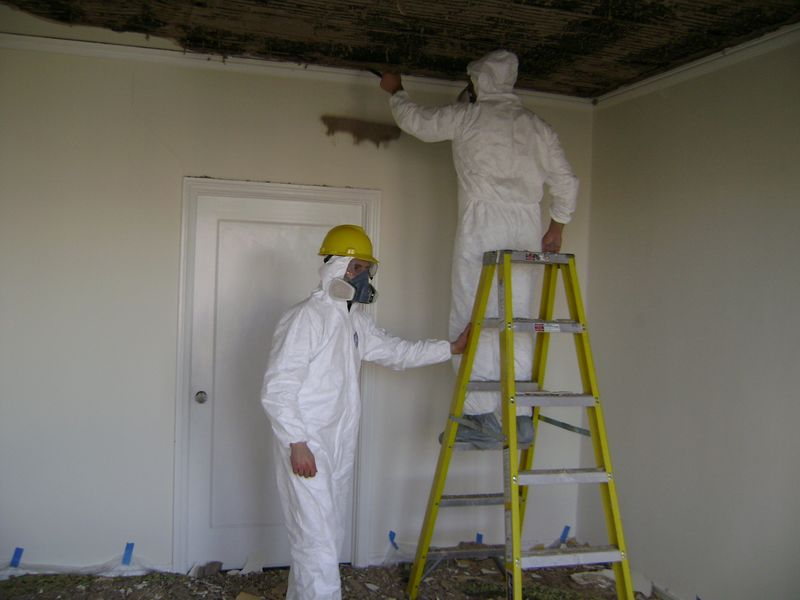 Water Damage Mold Tips And Local Help