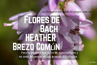 Flores de Bach Heather o Brezo común ayuda a la apertura, tolerancia, y compresión