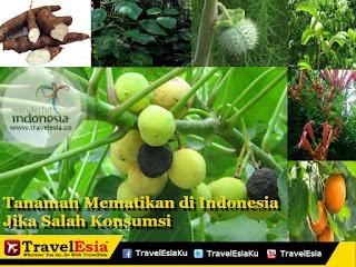 Tanaman mematikan di indonesia