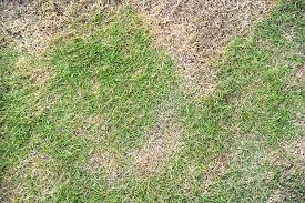 O que fazer com a grama seca?