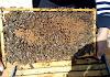 Μέγιστη ανάπτυξη ακόμα και των μικρότερων μελισσιών: Απόσταγμα όλης της εμπειρίας μου