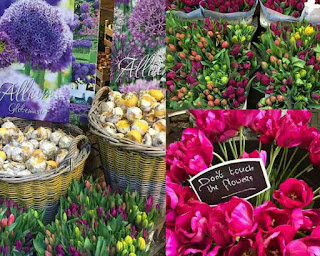 Bloemenmarkt atau Floating Flower Market, Tempat Wisata di Belanda Terbaik yang Wajib Dikunjungi, wisata belanda murah, tempat wisata di amsterdam, tempat wisata di belanda saat musim dingin, tempat belanja di belanda, paket wisata belanda, tempat romantis di belanda, taman bunga belanda, taman belanda