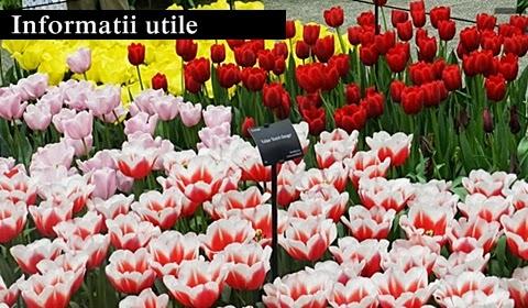 Keukenhof-garden-lalele-Olanda