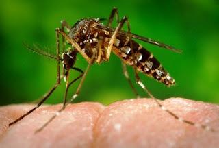 Virus Zika : Kenali Resiko, Gejala & Pencegahannya Disini !