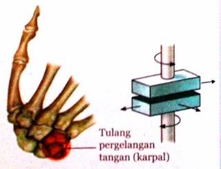Jenis Serta Fungsi Sendi dan Otot Pada Sistem Gerak Manusia