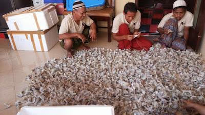 Burung Walet Banyak Dimanfaatkan Untuk Bisnis Besar