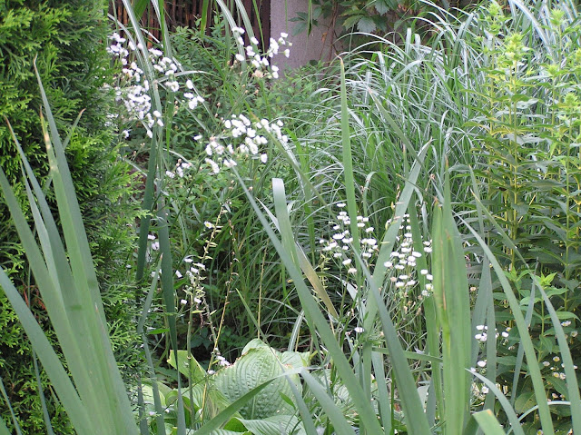 dzikie rośliny, chwasty