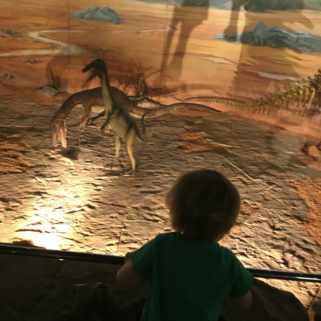National-Museum-Cardiff-a-toddler-explores-toddler-looking-at-dinosaurs