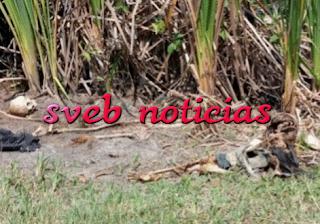 Hallan cuerpo putrefacto en colonia Rafael Hernández Ochoa de Poza Rica Veracruz