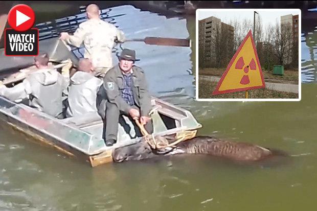 Penduduk setempat bingung ketika elf diselamatkan dari air RADIOACTIVE Chernobyl setelah tiga hari