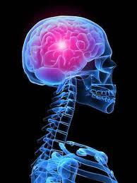 Rose Elfanny Blog..: Kanker Otak...