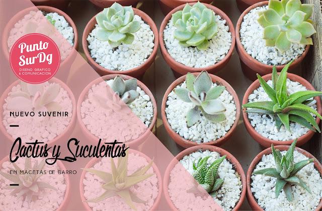 suvenir cactus suculentas